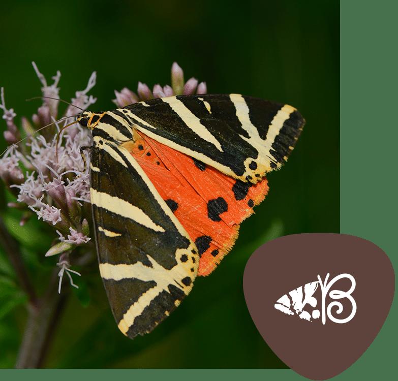 butterflies_rhodes-home-image-1-1